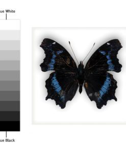 Butterfly Tiles Stickers - Color Spectrum
