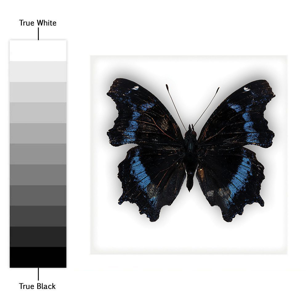 Choose Size /& Color Classic Butterfly Vinyl Sticker Decal