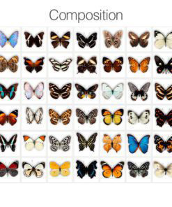 Butterfly Tiles Stickers - Composition