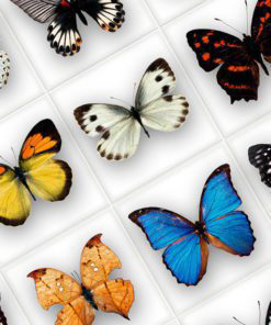 Butterfly Tiles Stickers - Detail